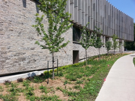The exterior of the Jackman building from Queen's Park. The ground cover will eventual grow in, greening and softening the landscape.